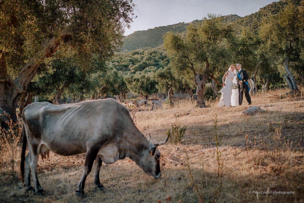 matrimonio con ulivi e paesaggio del Gargano